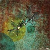 """Magda Bolumar, """"Sin título"""", 1971 pintura acrílica, tinta y goma laca sobre cartulina 15 x 15 cm"""