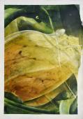 Vicenç Viaplana, 'Botànica Incidental 1' 2016 acrylic on paper 100 x 70 cm